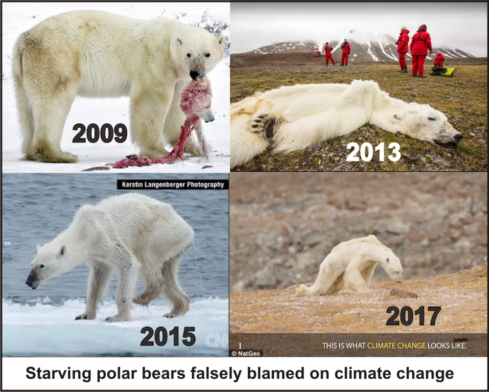 Starving-polar-bear-composite_11-sept-2019